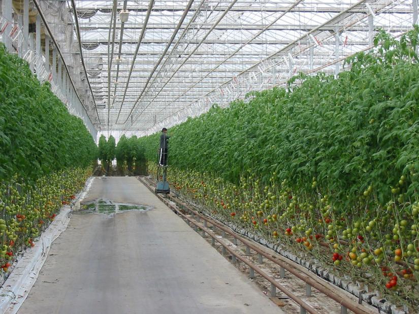 Outside in free association design for Soil less farming